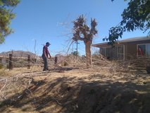 Offering Hauling Services, Tree Cutting, Debris Removal, Shrub Trim in Yucca Valley, California