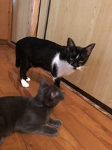 2 cats that need a home in Okinawa, Japan
