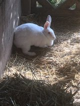Emptying barn need to rehome in Rolla, Missouri