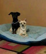 2 very well behaved dogs in Ruidoso, New Mexico