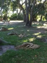 Yard clean up& debris removal in Beaufort, South Carolina