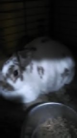I have two female rabbits in Leesville, Louisiana