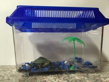 BEST TURTLE PET EVER! in Yucca Valley, California