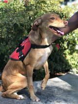 Dog Re-Homing in Fairfield, California
