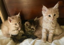Kittens in Yucca Valley, California