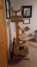 Large cat tree in Orland Park, Illinois