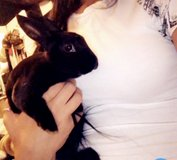 Rabbit for Rehome in Glendale Heights, Illinois