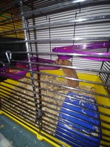 Hamster and cage in Clarksville, Tennessee