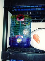 Hamster lot need gone asap in Camp Pendleton, California