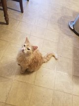 Snoball needs a new home in Bolingbrook, Illinois