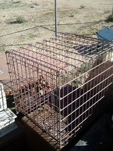 Pet Kennel in 29 Palms, California