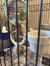 blue and green parrotlets in Fort Knox, Kentucky