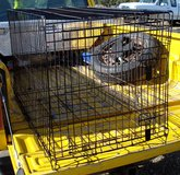 XL DOG Strong Metal KENNEL / CRATE Brand FOUR PAWS in Alamogordo, New Mexico