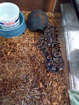 snake with reptile enclosure tank in Beaufort, South Carolina