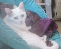 Lost our Cat in Yucca Valley, California