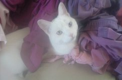 Missing our Cat in Yucca Valley, California