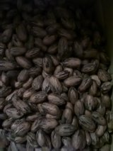 Pecans(in shell) in Alamogordo, New Mexico