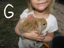 Mini lop bunnies in Cleveland, Texas