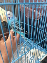 looking for a parakeet and a  parrot in DeRidder, Louisiana