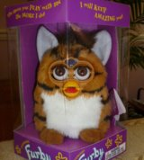 Furby - The Tiger in Travis AFB, California