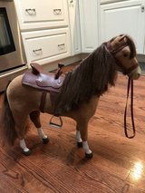 American girl horse in Chicago, Illinois