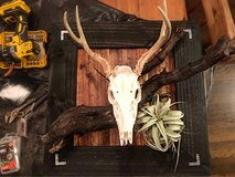 looking for taxidermy work in Clarksville, Tennessee