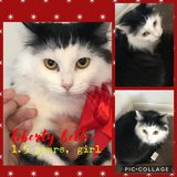 Cat-Liberty Belle in Baytown, Texas