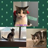 Cat-Freedom in Baytown, Texas