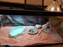 bearded dragon in Clarksville, Tennessee