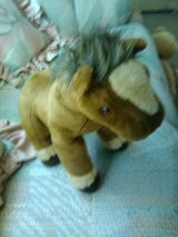 TY Pony in Yucca Valley, California