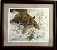 John Seerey-Lester - Lying Low - Cougar in Westmont, Illinois