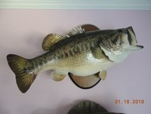 Bass mounted trophy in Warner Robins, Georgia