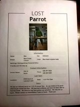 MISSING:  Blue Crown Conure in Naperville, Illinois