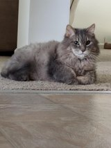 LOST SENIOR CAT in Lockport, Illinois