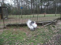 Baby Royal Palm Turkeys in Cleveland, Texas
