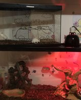 Ball python with large tank + supply in Chicago, Illinois