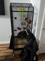Lovely LoveBirds with 5' cage in Clarksville, Tennessee