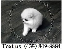 Boomer Pomeranian Puppies For Adoption, For Info Text at (435) 849-8884 in Belleville, Illinois