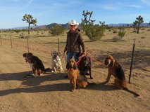 Dog Training: Basic to Advanced Obedience, Agility, Swimming and more! in Yucca Valley, California