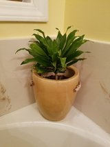 Plant in Mustard Color Ceramic Pot in Fort Campbell, Kentucky