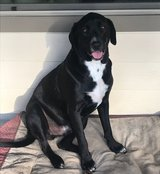 Scout -- Needing a Fur-Ever Home in Conroe, Texas