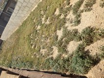 Yard work available in 29 Palms, California