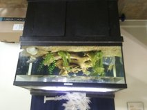 75 gallon fish tank, stand, light, decor, 2 large filters in 29 Palms, California