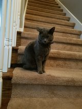 lost cat in Clarksville, Tennessee