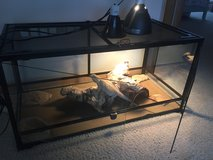 Leather Back Bearded Dragon w/ setup in Yorkville, Illinois