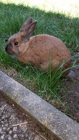 Bunny rabbit neutered in Ramstein, Germany