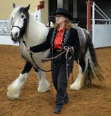 Gypsy Vanner Show Horse in Houston, Texas