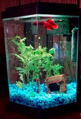 Fish tank in Naperville, Illinois