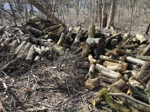 FREE FIREWOOD in Glendale Heights, Illinois