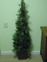 4 ft. boxwood topiary in St. Charles, Illinois